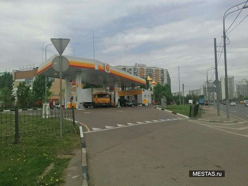 Shell - фотография №2